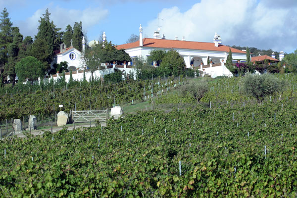 Soc. Agr. D.Diniz - Monte da Ravasqueira Vineyard in Arraiolos, Portugal